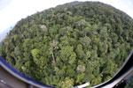 Tropical rainforest in Borneo -- sabah_aerial_0917