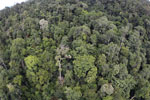 Tropical rain forest in Borneo -- sabah_aerial_0918
