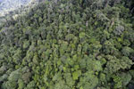 Tropical forest in Borneo -- sabah_aerial_0919
