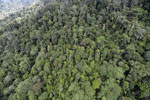 Tropical rainforest in Borneo -- sabah_aerial_0920