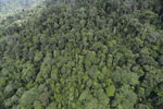 Tropical rain forest in Borneo -- sabah_aerial_0921