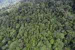 Tropical forest in Borneo -- sabah_aerial_0922