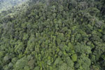 Tropical rainforest in Borneo -- sabah_aerial_0923