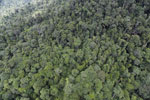 Tropical rainforest in Borneo -- sabah_aerial_0926