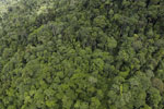 Tropical forest in Borneo -- sabah_aerial_0928