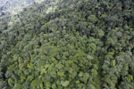 Tropical rainforest in Borneo -- sabah_aerial_0929