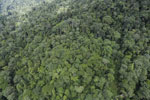 Tropical rain forest in Borneo -- sabah_aerial_0930