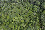 Tropical forest in Borneo -- sabah_aerial_0931