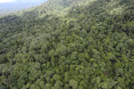 Tropical rainforest in Borneo -- sabah_aerial_0933