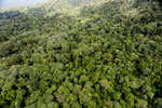 Tropical forest in Borneo -- sabah_aerial_0935