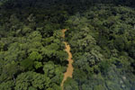 Tropical forest river in Borneo