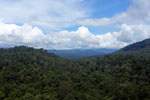 Tropical forest in Borneo -- sabah_aerial_0941