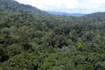 Logging truck in Borneo -- sabah_aerial_0942