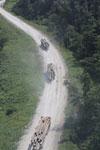 Logging trucks in Borneo -- sabah_aerial_0964