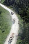 Logging trucks in Borneo -- sabah_aerial_0965