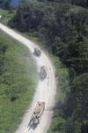 Logging trucks in Borneo -- sabah_aerial_0967