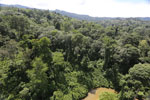 Tropical rainforest in Borneo -- sabah_aerial_0988