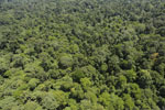 Tropical rainforest in Borneo -- sabah_aerial_0991