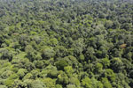 Tropical rain forest in Borneo -- sabah_aerial_0992