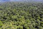 Tropical forest in Borneo -- sabah_aerial_0993