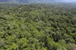 Tropical rainforest in Borneo -- sabah_aerial_0994