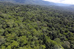 Tropical rain forest in Borneo -- sabah_aerial_0995