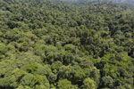 Tropical forest in Borneo -- sabah_aerial_0996