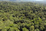 Tropical rainforest in Borneo -- sabah_aerial_0997