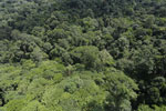 Tropical rain forest in Borneo -- sabah_aerial_0998