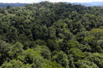 Tropical rainforest in Borneo -- sabah_aerial_1000