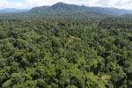 Tropical rain forest in Borneo -- sabah_aerial_1001