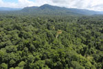 Tropical forest in Borneo -- sabah_aerial_1002