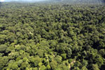 Tropical rain forest in Borneo -- sabah_aerial_1004