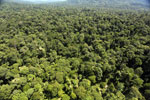 Tropical forest in Borneo -- sabah_aerial_1005