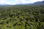Tropical rainforest in Borneo -- sabah_aerial_1006