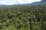 Tropical rain forest in Borneo -- sabah_aerial_1007