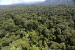 Tropical rainforest in Borneo -- sabah_aerial_1009