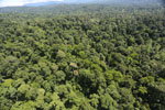 Tropical forest in Borneo -- sabah_aerial_1011