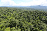 Tropical rainforest in Borneo -- sabah_aerial_1013