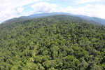 Tropical forest in Borneo -- sabah_aerial_1015
