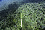 Logging road in the rainforest of Borneo