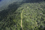Logging road in the Borneo rainforest -- sabah_aerial_1018
