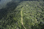 Logging road in the Borneo rain forest