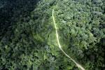Logging road in the rain forest of Borneo