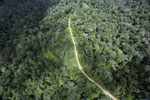Logging road in the rainforest of Borneo -- sabah_aerial_1022