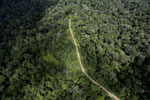 Logging road in the Borneo rainforest