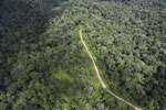 Logging road in the Borneo rain forest -- sabah_aerial_1024