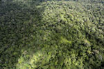 Borneo rainforest -- sabah_aerial_1029