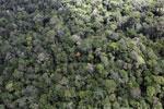 Borneo rainforest -- sabah_aerial_1030