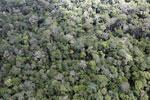 Borneo rainforest -- sabah_aerial_1031